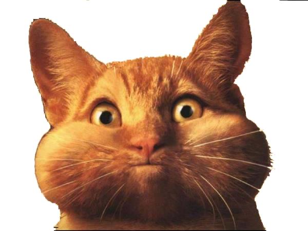 educated cat - photo #45